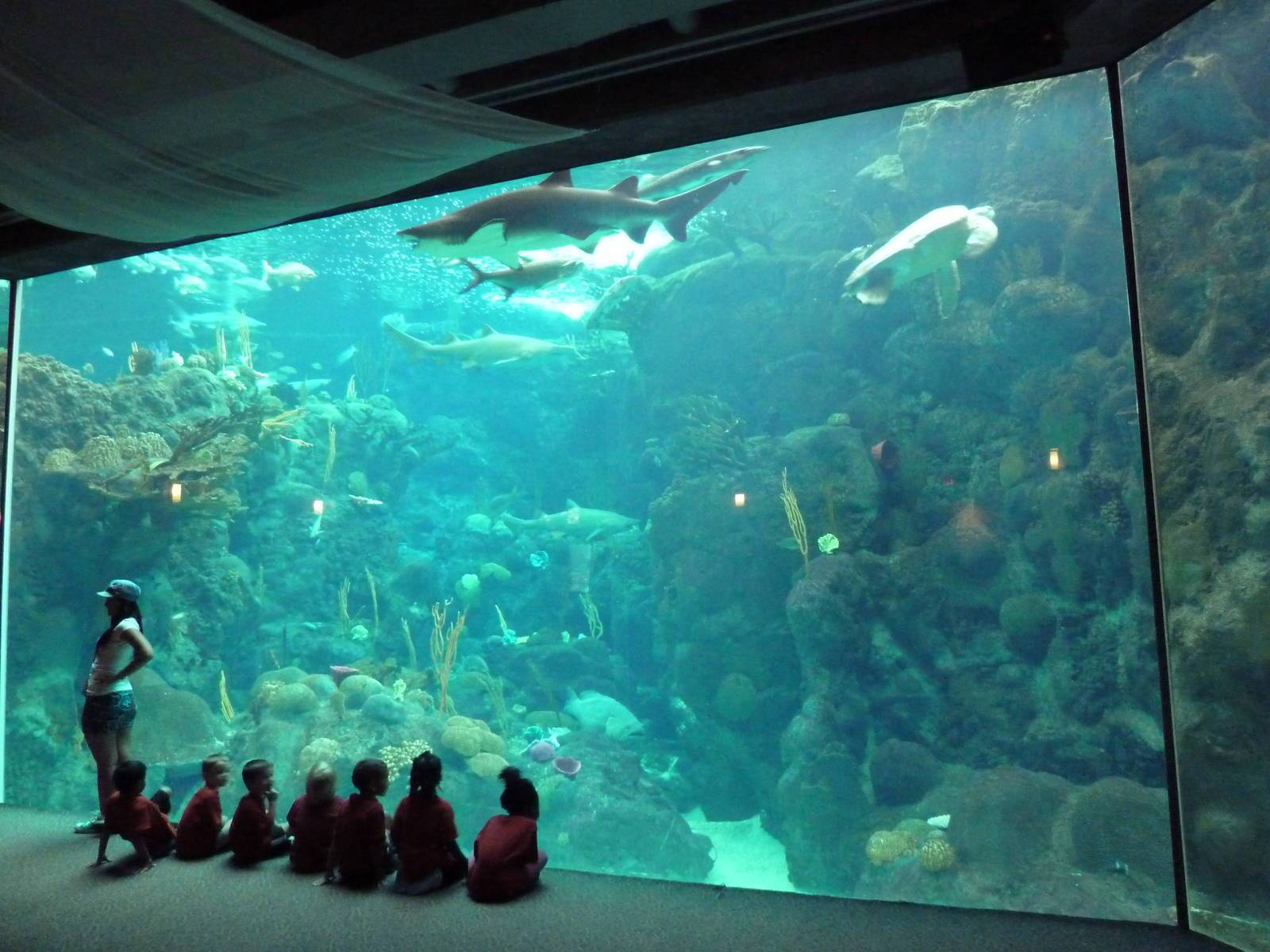 Marine Life Gallery with Real-Experience inside a 3,000-Gallon Tank