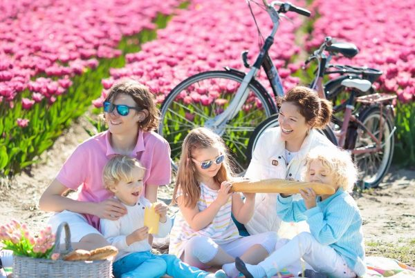 Family picnic at tulip flowers fields in Holland, Netherlands