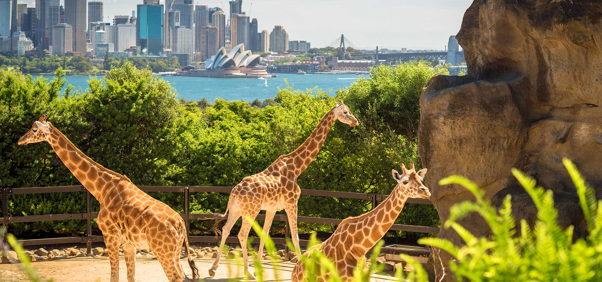 What You Must Experience on Your First Trip to Sydney