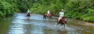 Horse Riding Peninsula's Jungle