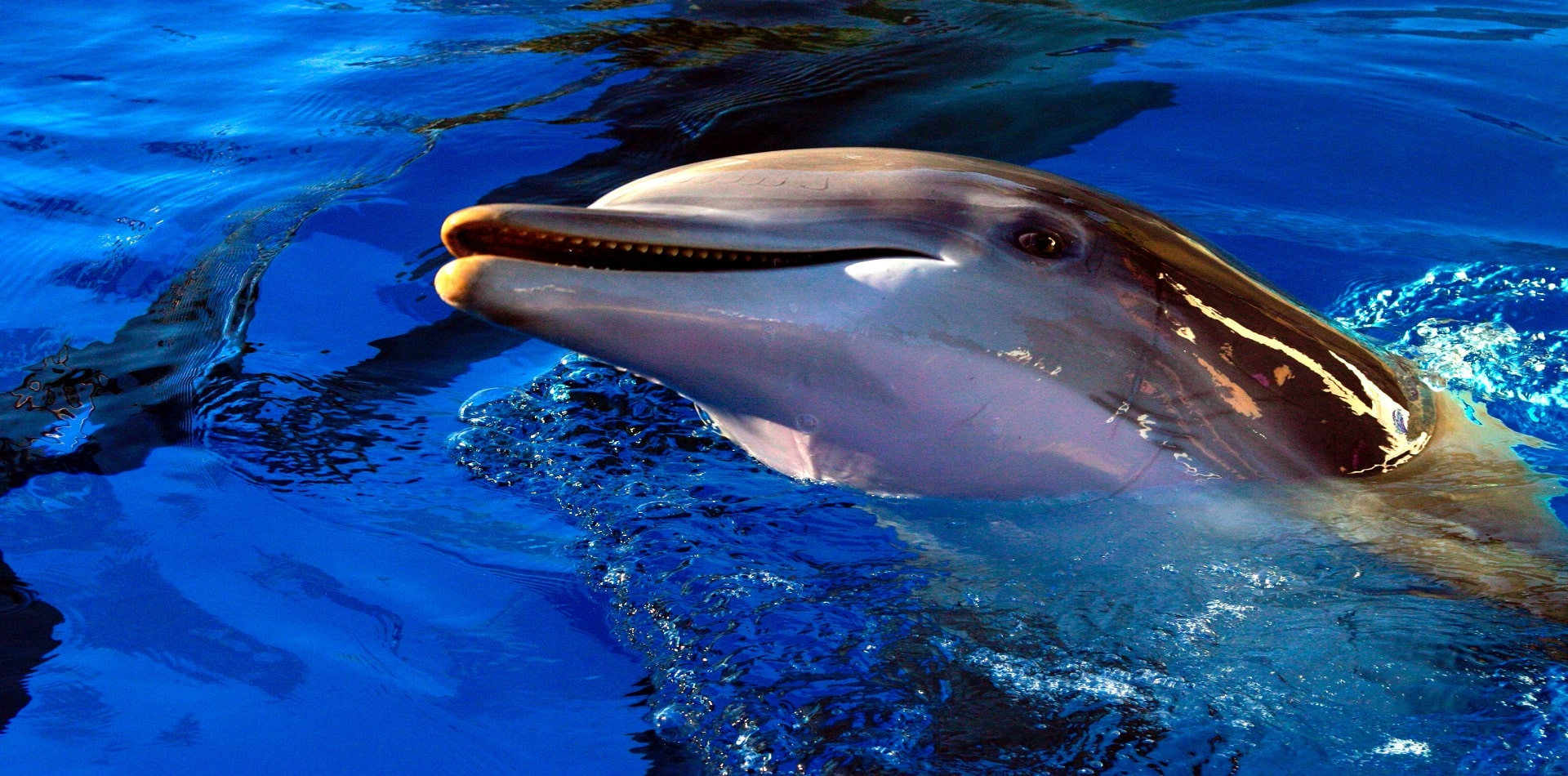 Dolphin Show in Vegas