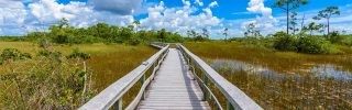 Mahogany Hammock Trail of the Everglades National Park Florida