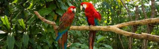 Parrots - Jungle Island, Miami