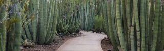 Cactus plants in Phoenix Arizona